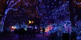 Wildlights Evening Photography at Denver Zoo-Lecture & Gallery Show- Denver