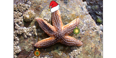 Capturing Our Coast Wine & Science Christmas Special