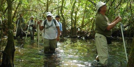 Corkscrew Beginner Swamp Walks