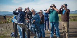 Sears Point Winter Bird Walks