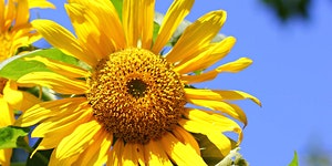 Clean & Green: Easy Non-Toxic Gardening Workshop