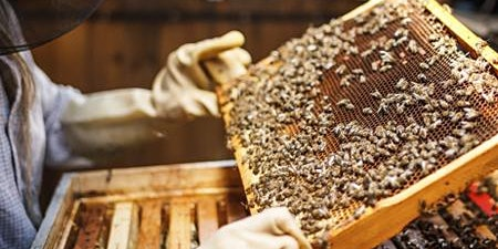 Gulf Coast Beekeepers of Florida - Monthly Meeting - Charlotte county