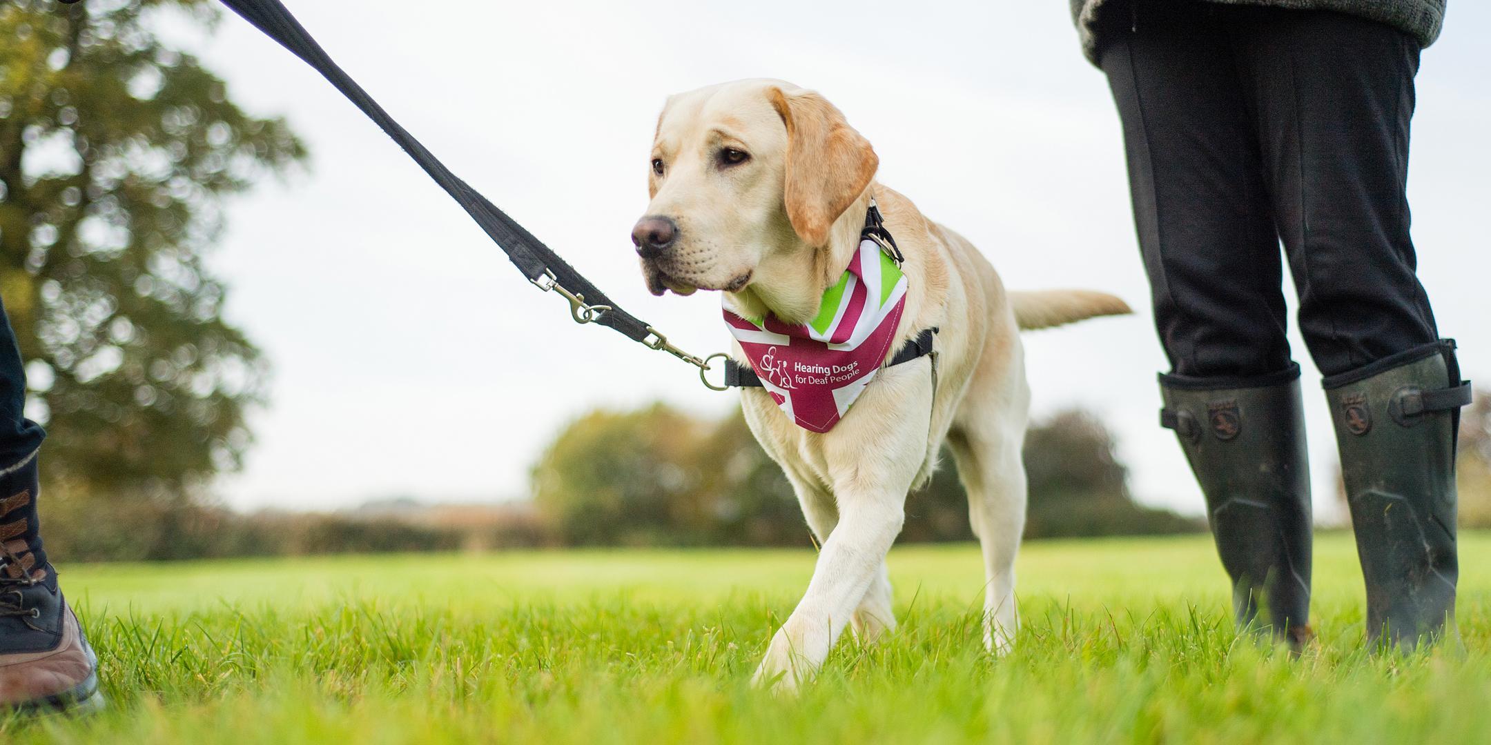 The Great British Dog Walk 2017 - Windsor Gre