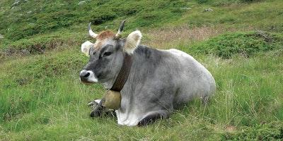 Impulsi dell'agricoltura biodinamica di Rudolf Steiner