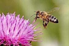 Tyneside Beekeepers logo