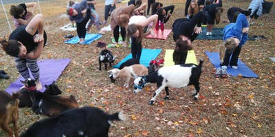 Therapeutic Goat Yoga (Lots of goat cuddles that often includes babies)