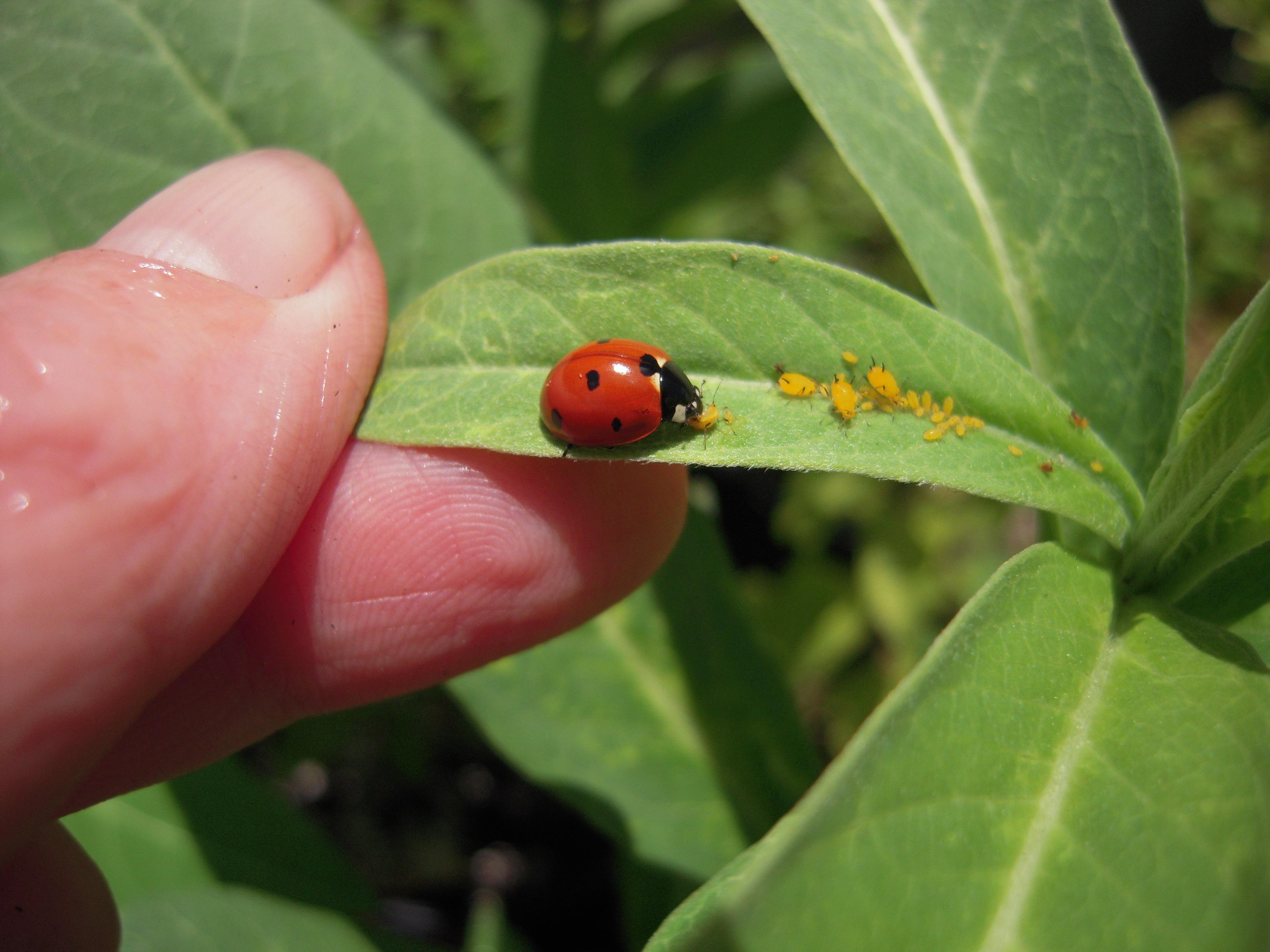 Organic Garden Pest Control North Haven Gardens Dallas 29 APR