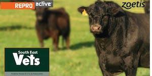 ReproActive Mount Gambier - More Calves, More Often