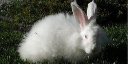 """Bunny Garden"" (TM) --  Rabbit Playdate"