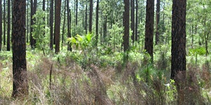 Forest Stewardship Workshop: Sell Your Timber for what...