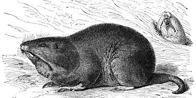Vertebrate Pest Control in the Garden (Black-tailed Deer, Pocket Gophers, Moles, Rats, Squirrels, Birds)