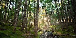 Forest Movement & Yoga Retreat, 2017