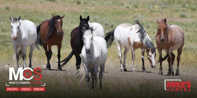 Wild Horses - Special 3-Part Workshop - Park Meadows
