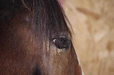 SMAART Horses logo
