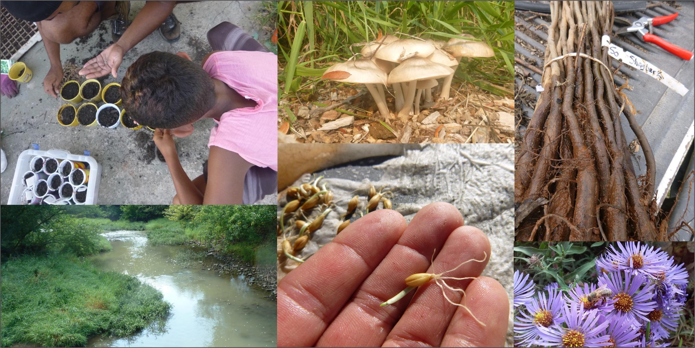 Beneficial Fungi in the Garden: Part 2