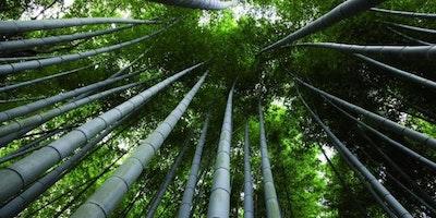 Conferenza sulle coltivazioni di Bambù Gigante in Italia