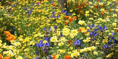 Color in Your Water-wise Garden