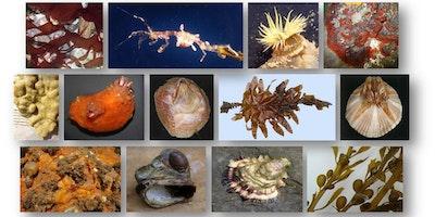 Short Course: Marine Non-native Species Identification Workshop