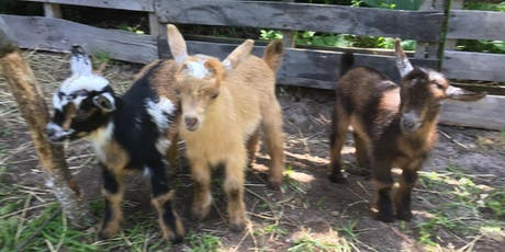 Gentle Goat Yoga plus Guided Meditation Combo (with lots of goat cuddles) tickets