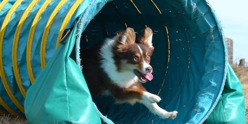 Training Class - Puppy Einstein