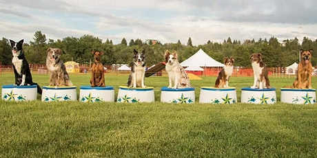 Training Class - Hollywoof! tickets