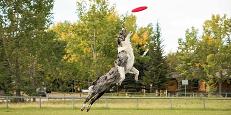 Training Class - Disc Dog Freestyle Fun tickets
