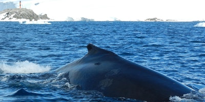 Short Course: An Introduction to Whale And Dolphin Biology And Conservation