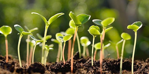 SAMS Seedlings