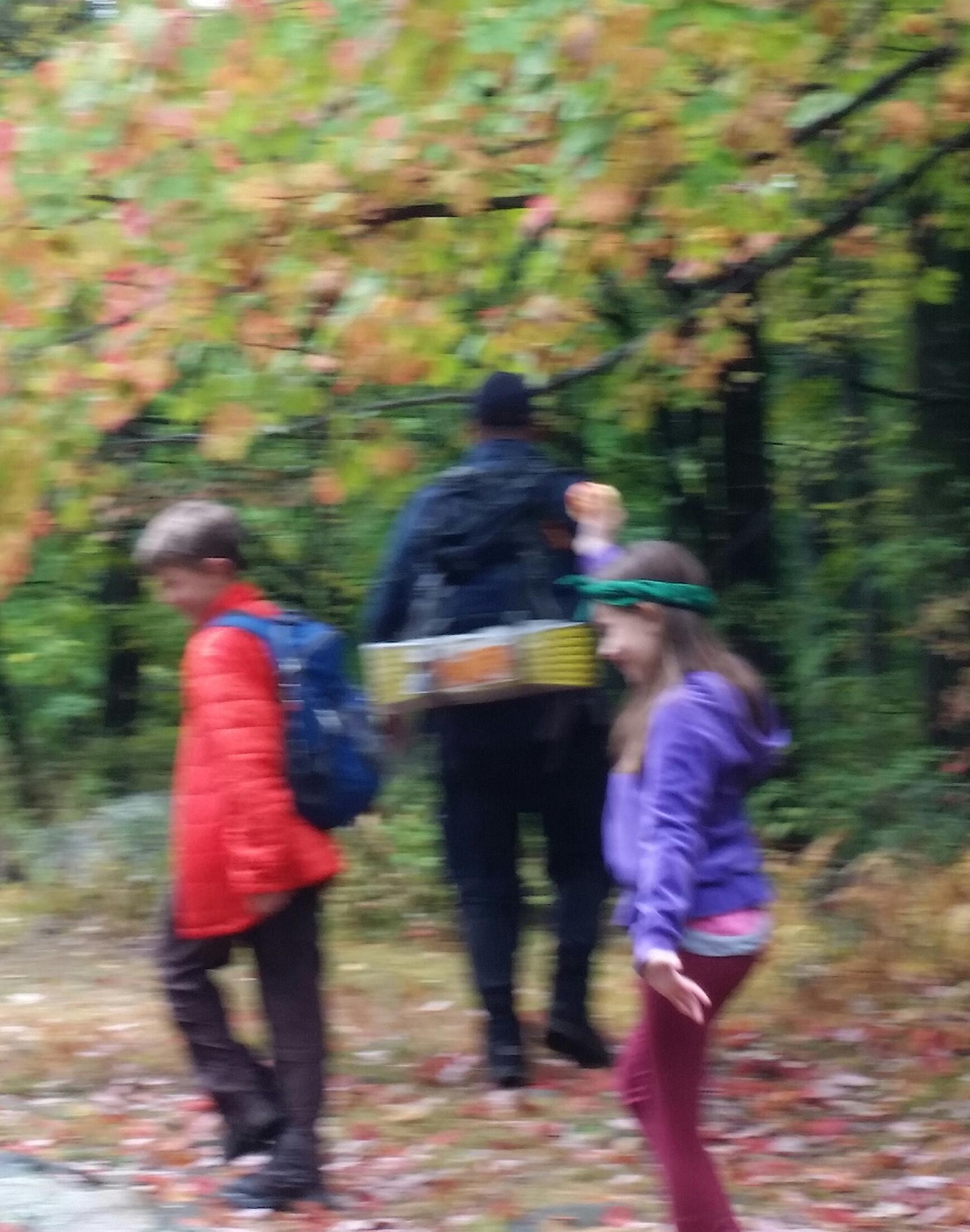 Mid-Week Family Forest Splendor