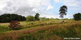 Mashomack Grassland Botanical Hike tickets