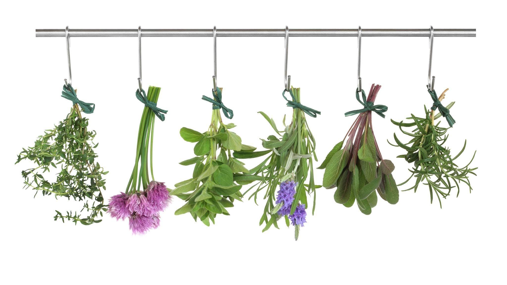 Beginning Herbs & Medicine Making Workshop