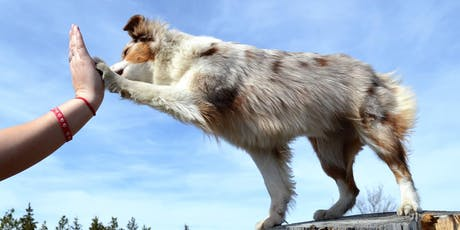 Dog House Training Academy tickets