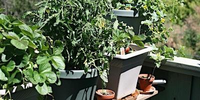 Edible Container Garden