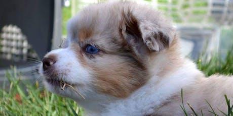 Training Class - Puppy Kindergarten tickets