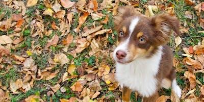Training Class - Puppy Elementary