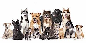 Beginners Animal Communication Class
