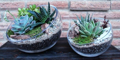 sunshine succulent diy bar workshop tickets - Home And Garden Show Dallas