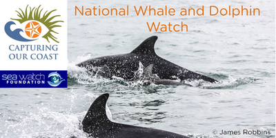 Seawatch National Whale and Dolphin Watch - With CoCoast