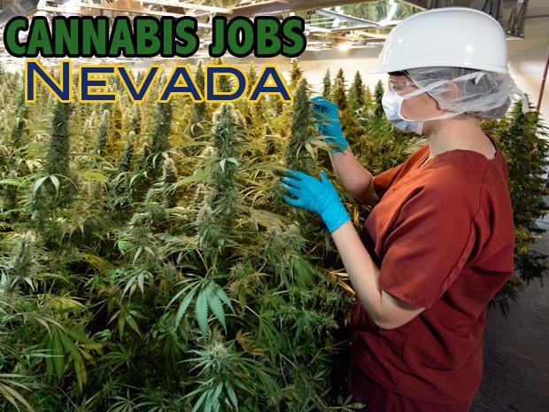 Cannabis Jobs Nevada Free Medical Recreational Marijuana Info Session 19 Jul 2017