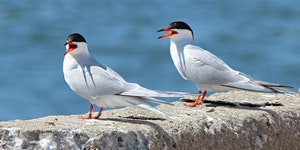 GovIsland Sat. 7/8 @ Noon w Christodora & NYC Audubon...