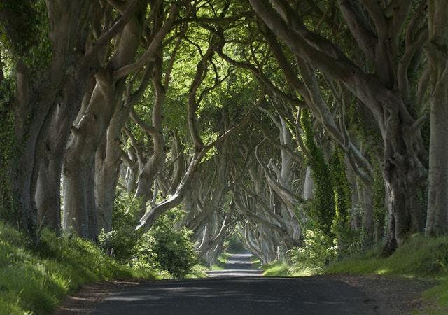 Game of Thrones Tour from Belfast including Giant's Causeway Mar18Jul18