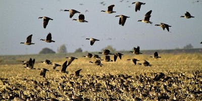 Guided Nature Walk at the Cosumnes River Preserve