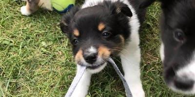 Drop In - Puppy Play & Socialization