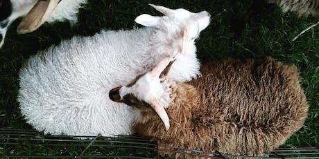 Beginning Shepherding Course tickets