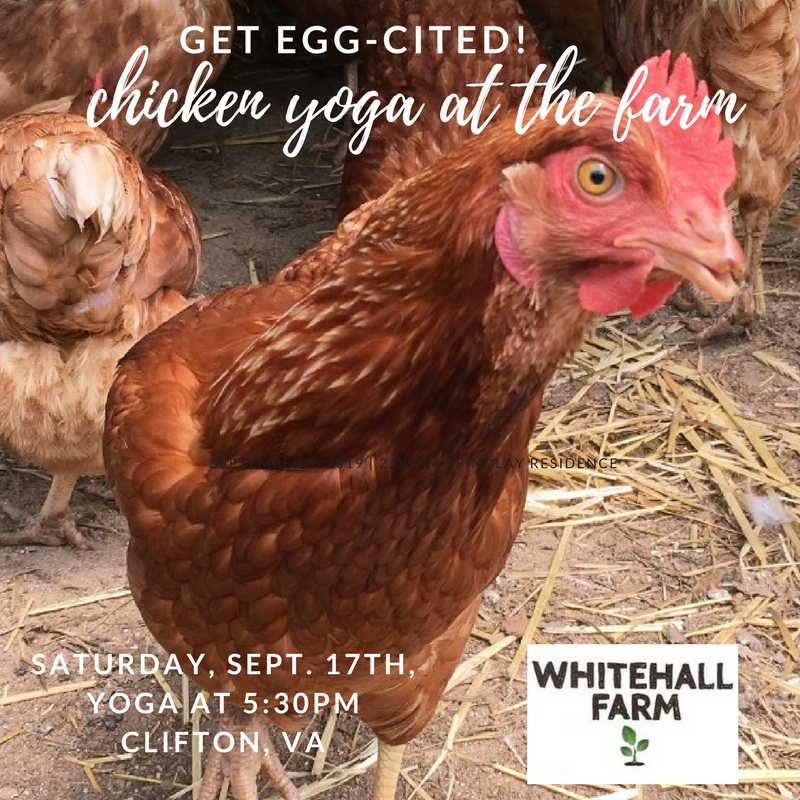 Get Egg-cited: Chicken Yoga at the Farm