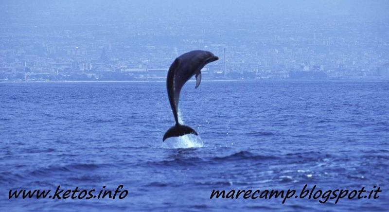 Dolphin watching in Sicily