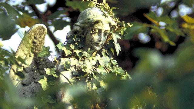 Guided Walk in  Highgate cancelled