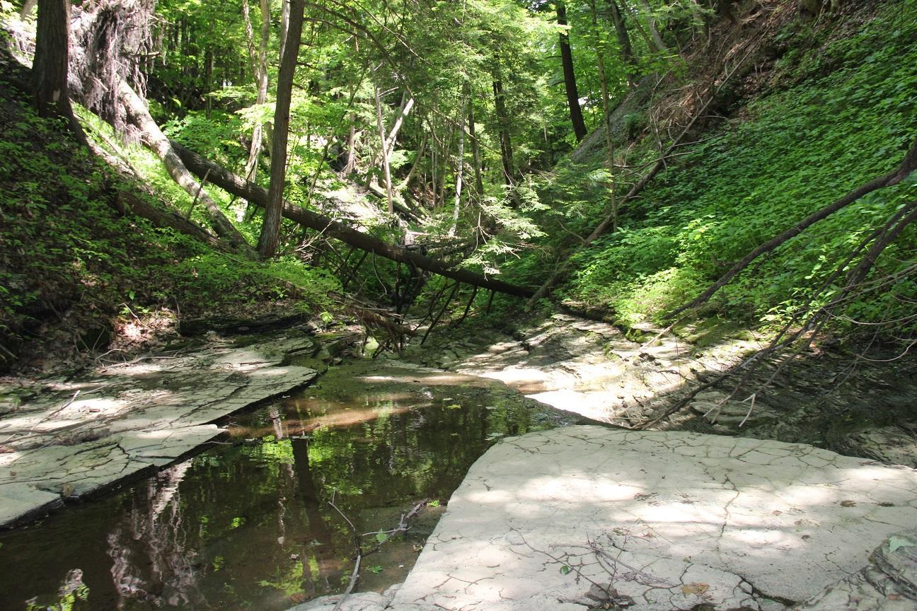 Owens Falls Nature Walk - August 23