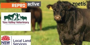 ReproActive Yass - More Calves, More Often