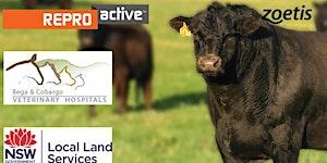 ReproActive Bega - More Calves, More Often